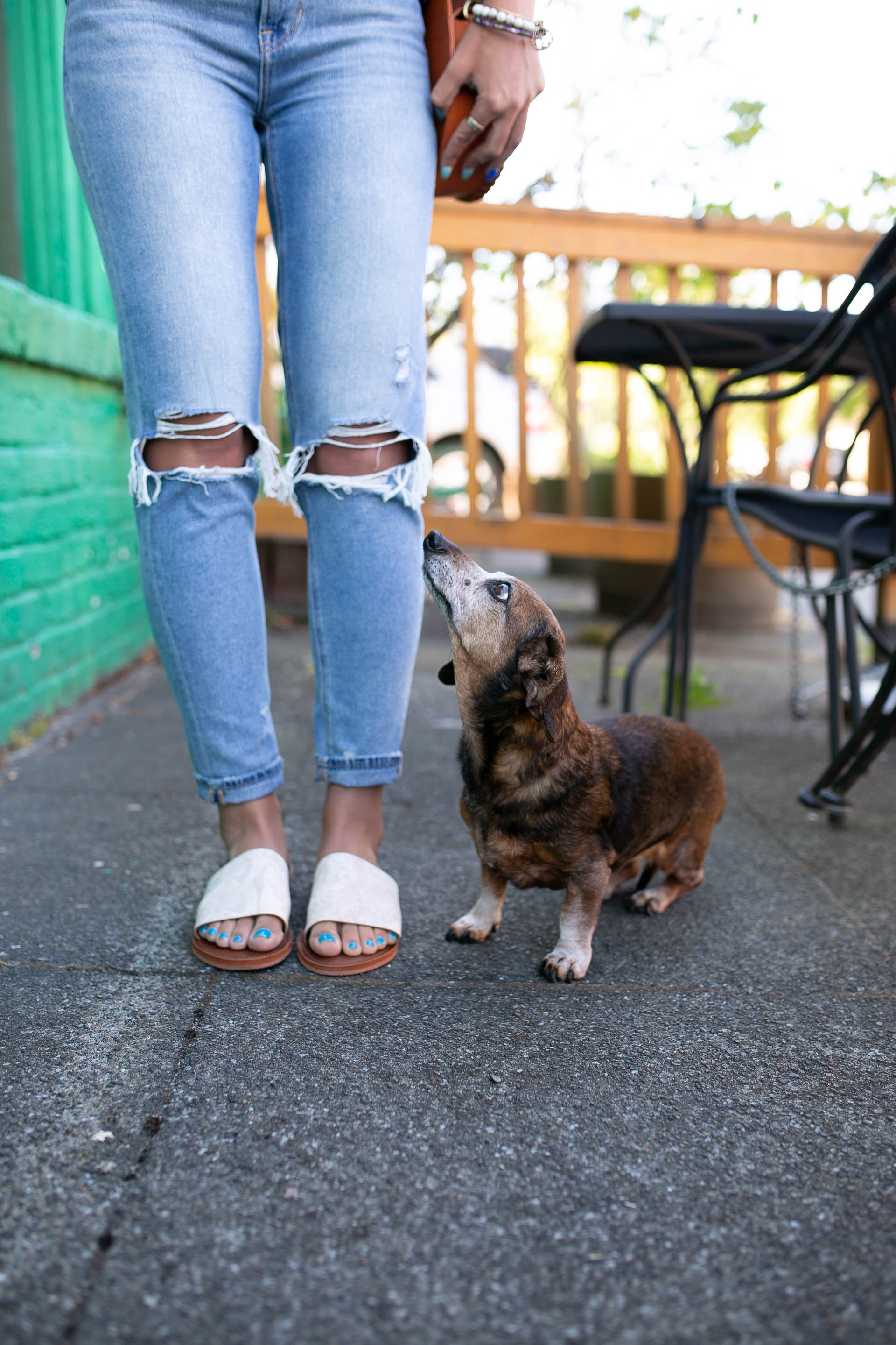 dachshund, diary of this girl megan, seattle fashion blogger