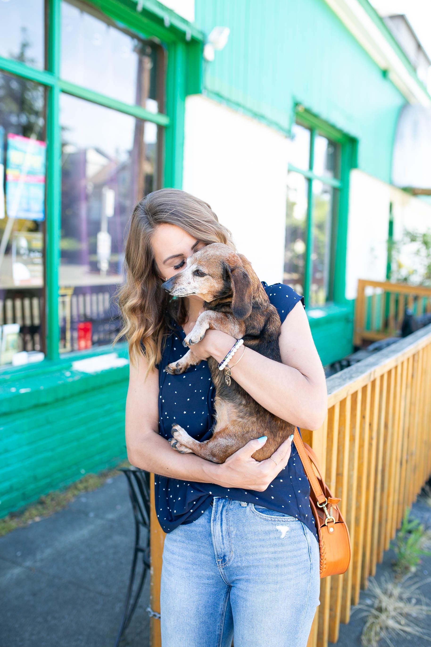 senior dog tips, dachshund, diary of this girl megan